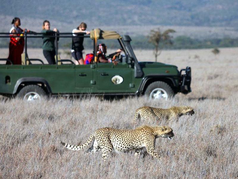 De-Wildt-Cheetah-Research-Project5