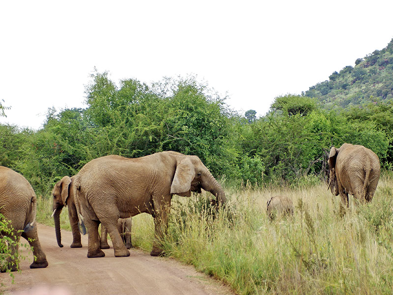 Pilanesberg-Nature-Reserve-tour2