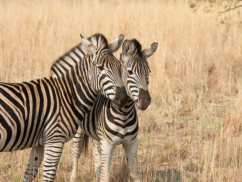 Pilanesberg-Nature-Reserve-tour4