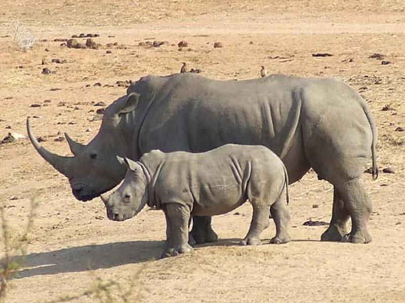 Rhino-Park-Tours2