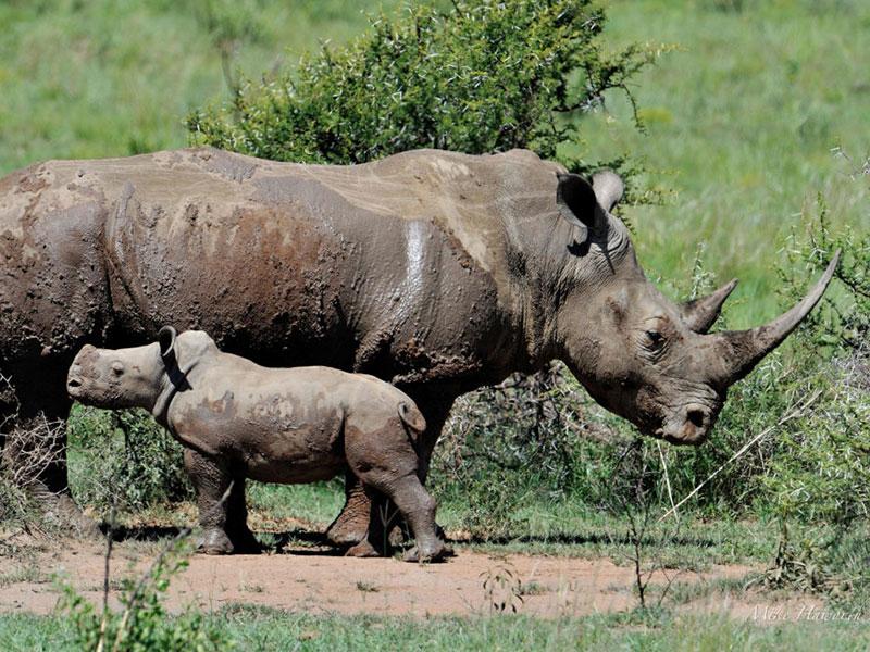 Rhino-Park-Tours4