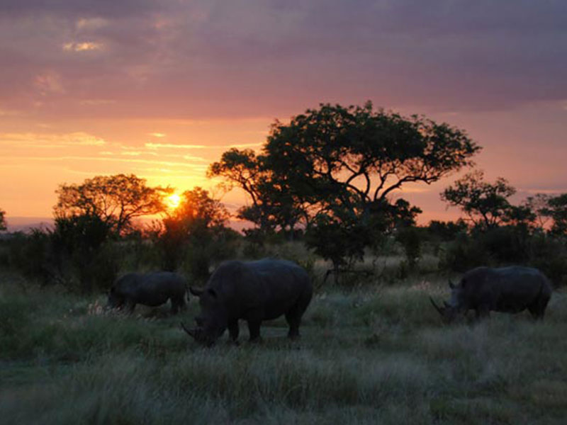 The-Kruger-National-Park5