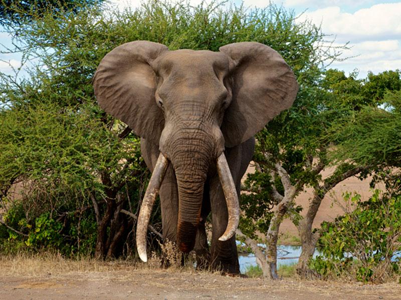 The-Kruger-National-Park6