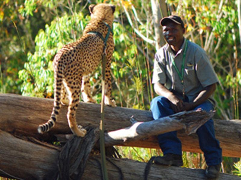De-Wildt-Cheetah-Research-Project8