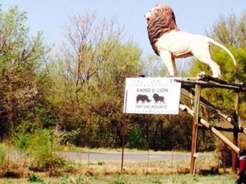 The-Lion-and-Safari-Park-Tours2