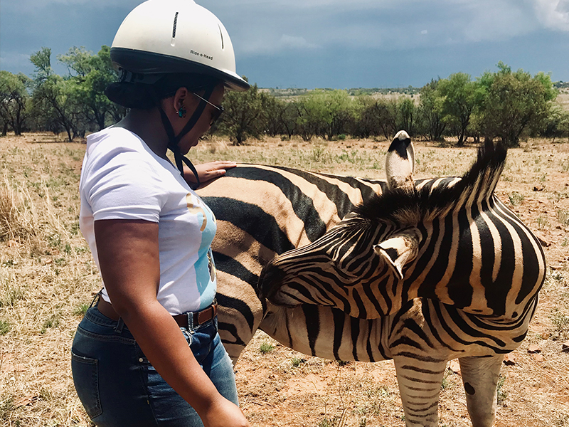 Zebra interaction